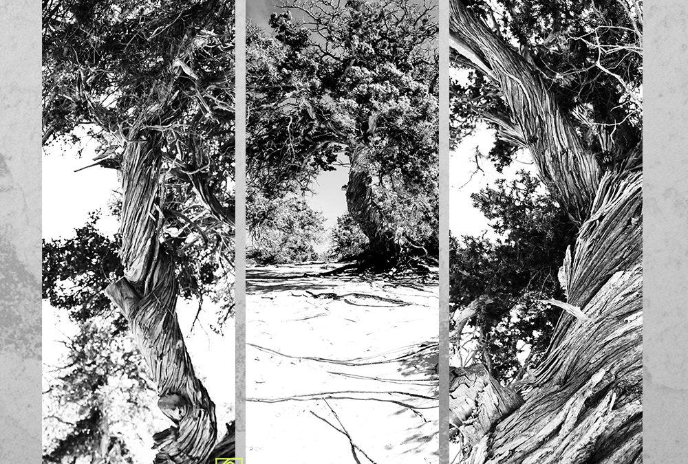 Drzewo – tryptyk fotograficzny